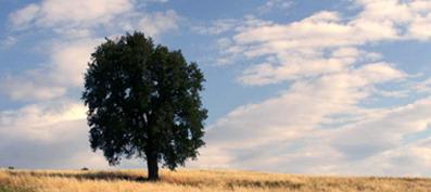 Le mani nella terra – Rassegna musicale all'Albero dei Pavoni